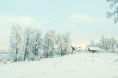 Inverno Forest Landscape Tree con il fondo della neve Immagine Stock Libera da Diritti