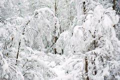 Inverno Forest Landscape Tree con il fondo della neve Fotografia Stock