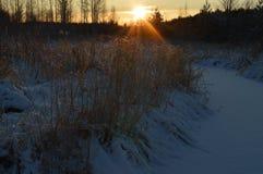 inverno Forest River no nascer do sol do amanhecer Fotos de Stock Royalty Free
