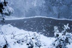 Inverno Forest With Snowing Fotografie Stock Libere da Diritti