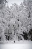 Inverno Forest Wonderland Black White fotografie stock