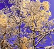 Inverno in foresta fotografia stock libera da diritti