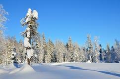 Inverno, foresta del Altai montagnoso Fotografia Stock Libera da Diritti