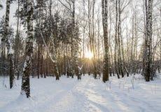 Inverno Forrest Fotografie Stock Libere da Diritti