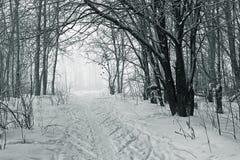 Inverno frio Foto de Stock Royalty Free