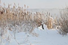 Inverno frio Fotografia de Stock
