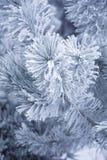 Inverno gelado Fotografia de Stock Royalty Free