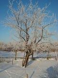 Inverno gelido Immagini Stock