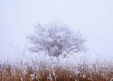 Inverno ghiacciato Fotografia Stock