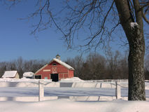 Inverno: granaio rosso con l'albero in neve Fotografia Stock Libera da Diritti