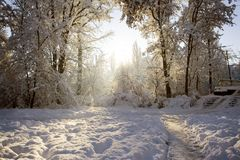 Inverno II fotografia de stock