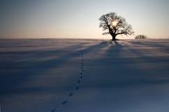 Inverno III Immagini Stock Libere da Diritti