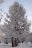Inverno Irkutsk Fotografie Stock