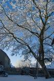 Inverno in Jivova Fotografie Stock