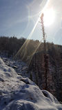 Inverno Krasnojarsk Fotografie Stock Libere da Diritti