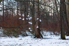Inverno La carta giapponese cranes l'attaccatura su un albero nella foresta Fotografie Stock