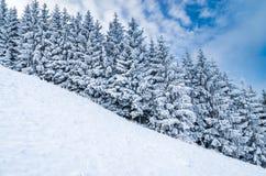 Inverno Lanscape Immagine Stock