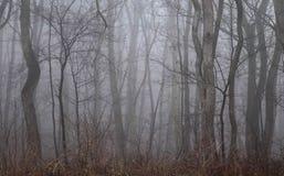 Inverno lunatico Forest Colorless ed alberi sfrondati immagini stock
