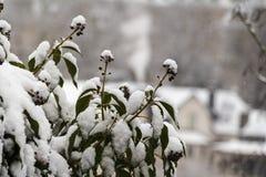 Inverno a Lussemburgo Fotografie Stock Libere da Diritti