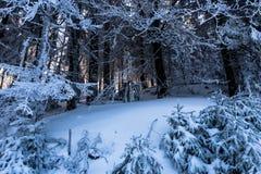 Inverno mágico imagem de stock royalty free