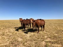Inverno in Mongolia Interna fotografie stock libere da diritti