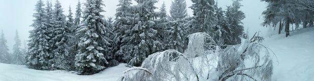Inverno in montagne carpatiche Fotografia Stock