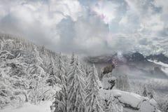 Inverno Mountain View dei cervi immagine stock