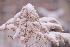 inverno na alma foto de stock