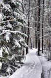 Inverno na floresta foto de stock royalty free