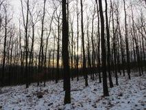 Inverno na floresta Fotografia de Stock
