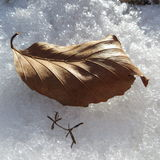 Inverno na floresta Foto de Stock