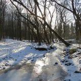 Inverno na floresta Imagens de Stock