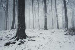 inverno na floresta com névoa Foto de Stock