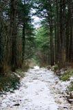 inverno na floresta conífera imagens de stock