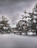 inverno na floresta, meio-dia nebuloso Fotos de Stock