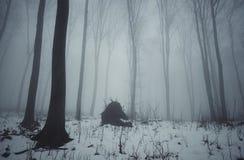 inverno na floresta na noite no dia de Natal Fotografia de Stock
