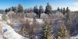 inverno na passagem Imagens de Stock Royalty Free