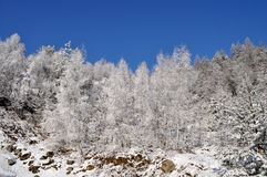 Inverno na república checa Fotografia de Stock Royalty Free