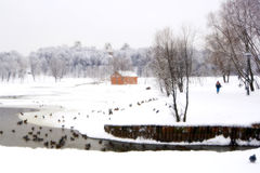 Inverno na reserva Tsaritsino em Moscovo Foto de Stock Royalty Free