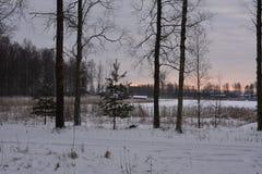 inverno na Suécia Foto de Stock
