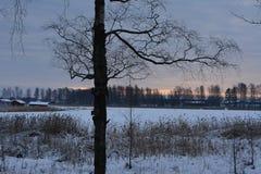 inverno na Suécia Fotos de Stock