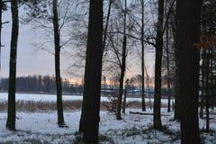 inverno na Suécia Imagens de Stock
