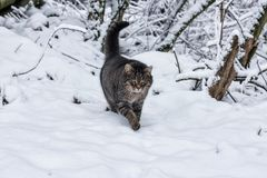 Inverno na vila fotografia de stock
