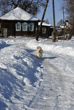 Inverno na vila do russo Foto de Stock Royalty Free