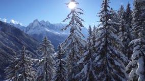 inverno nas florestas alpinas Neve nos ramos da árvore de Natal vídeos de arquivo