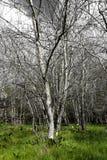 Inverno nas madeiras Imagem de Stock Royalty Free