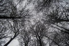 Inverno nas madeiras Foto de Stock Royalty Free