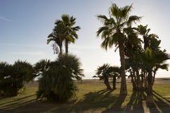 inverno nas praias de Malaga Costa del Sol Fotos de Stock Royalty Free