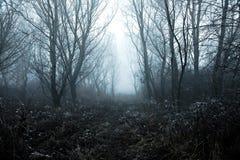Inverno nebbioso immagine stock