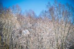 Inverno nei campi Fotografia Stock